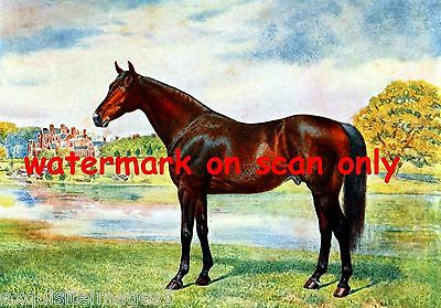 1911~British Champion Racehorse Persimmon~NEW Large Note Cards