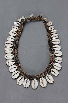 :: A Fine Cowrie Shell Necklace New Guinea