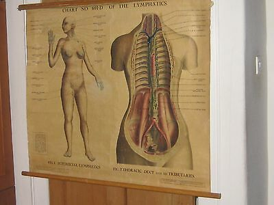 Lymphatic System, old chart, ADAM ROUILLY  Chart NO.601-D canvas backed c.1945