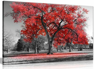 Large Tree Red Leaves Black White Nature Canvas Wall Art Picture Print