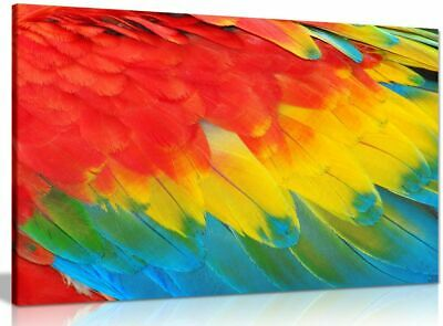 Tropical Parrot Feathers Colourful Macaw Canvas Wall Art Picture Print