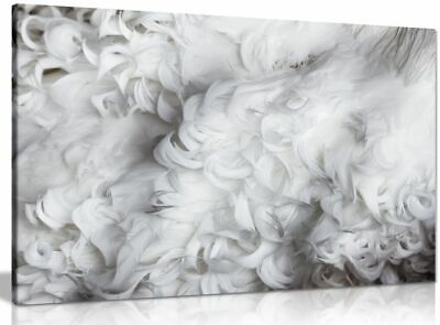 Black & White Feathers Canvas Wall Art Picture Print