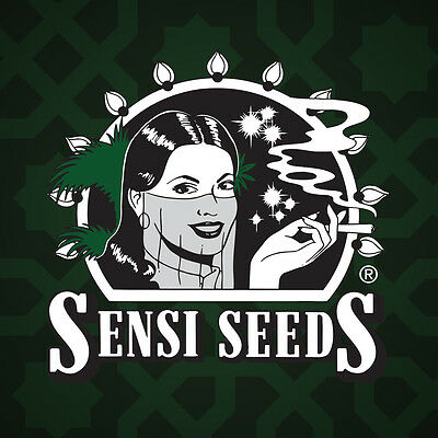 sensi seeds 3 semi northern lights automatic autofiorenti