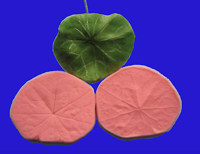 Lily pad Mould Nasturtium Leaf WATER LILY PAD veiner silicone mould