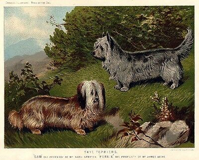 Antique Print of Skye Terriers from Cassell's Book of the Dog — Ready to Hang