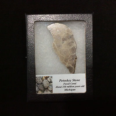 Petosky Stone Fossil Coral 170501 In Collectors Box Metaphysical
