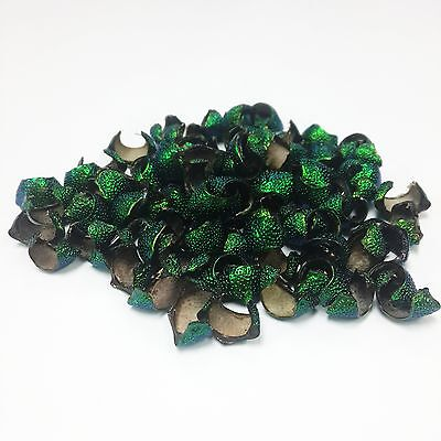 300 Thorax Insect Beetle Wings Elytra Natural Jewelry Craft Real Green Desing