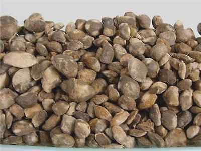 Bivalve fossils Madagascar Fossil clams 1 pound lots 40 plus fossils