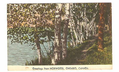 Vintage Postcard picturing shoreline path lined by birch trees, Norwood, Ont.