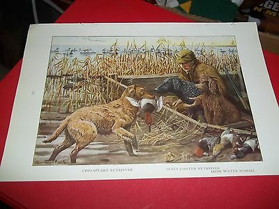 Louis A Fuertes Chesapeake Bay Retriever bookplate from 1919 National Geographic