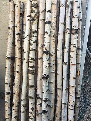 Decorative Logs Birch Poles By Posh Logs