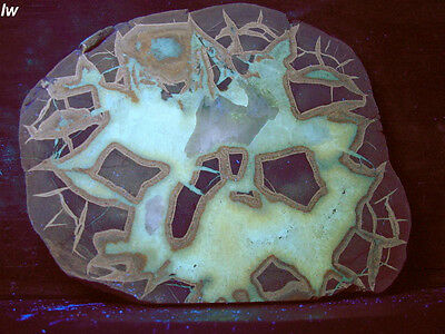 septarian slab great fluorescence and PHOS!