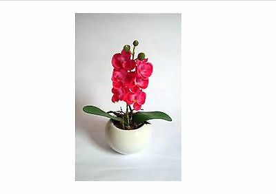 Mini Bonsai Orchid seeds balcony Mini Orchid flower pot seeds, 50 Seeds