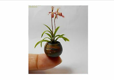 CUTE!!!Mini Bonsai Orchid seeds balcony Mini Orchid flower pot seeds,100 Seeds
