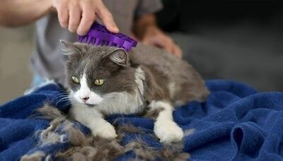 Pet Supplies Cat Zoom Groom Kitten Shedding Massaging Moulting Coat Brushes NEW!