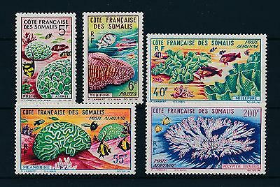 [47110] French Somali Coast 1963 Marine life Fish MNH