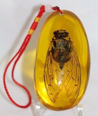 Large AWESOME and Unusual GIANT Cicada FLY Encased in Amber Resin Pendant