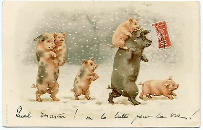 Helena MAGUIRE non signé . COCHONS . PIGS.