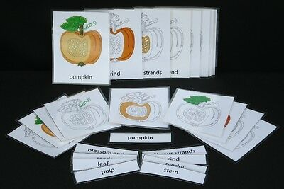 Montessori Parts of Pumpkin Nomenclature Cards