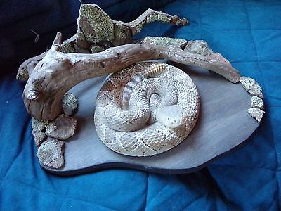Diamondback  Rattle Snake, Nicely Airbrushed reproduction mounted