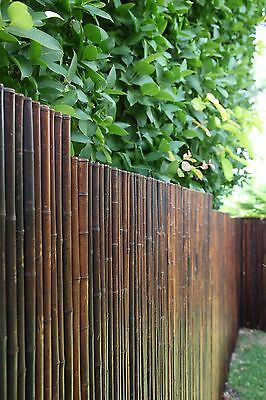 Bamboo fence , Bamboo screen , Bamboo  panels privacy screen 2.4 h x 1.2w