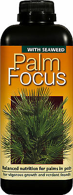Palm Focus (1 Litre) - Liquid Nutrient Feed For Palms & Cycads