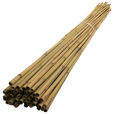 Bamboo Canes 2.4m/ 240cm/ 8ft, 14-16mm Thick Garden Plant Support Poles, 50pack
