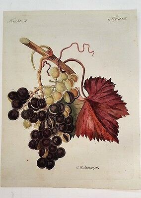 Antique Fruit Prints GRAPES by I.H. Schmuzer ~ Hand Colored Lithograph