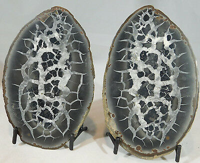 A Neat Pattern on This HUGE Cut and Polished Septarian Nodule! w/Stands 1041gr e