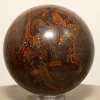 47mm Natural Bamboo Jasper Fossil Sphere Gemstone Crystal Mineral China + Stand
