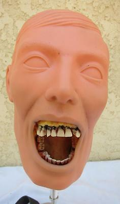 Dental Practice Simulation Adult School Mannequin Head Mount w/ Teeth + Stand l