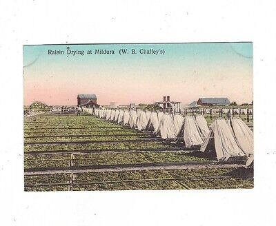 Australia VICTORIA Postcard, RAISIN DRYING at MILDURA  Vic   (WB CHAFFEYS)