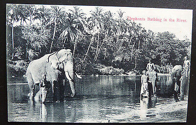 Animal Postcard- Elephants Bathing in the River- India
