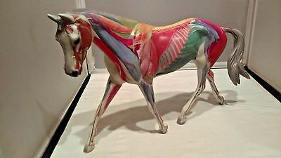 Breyer Traditional - Strapless - Anatomy in Motion - Good Condition - LOOK!