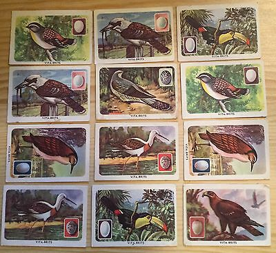 Vintage Vita-Brits Ceral Card Lot 30+ Birds Of The World & Their Eggs