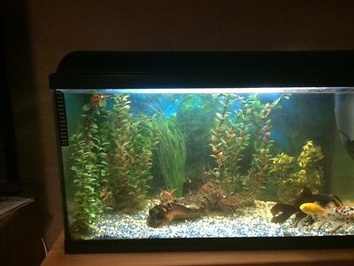 Large Cold Water Fish Tank