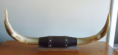 "M.p. & K.d. Horn Shop Ft. Worth, Tx. Souvenir Steer Horns Display 14"" Long"