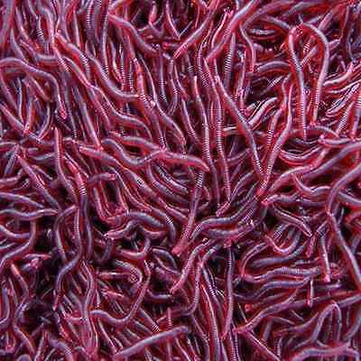 Soft Red Earthworm Fishing Bait Worm Lures Crankbaits Hooks Baits Tackle