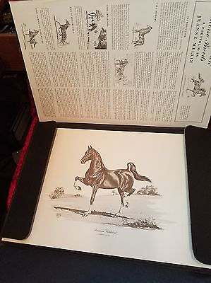 JEANNE MELLIN 1962 Complete Portfolio AMERICA'S OWN HORSE BREEDS 12 B&W Prints