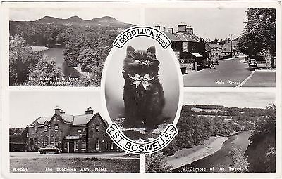 Black Cat Multiview, ST. BOSWELLS, Roxburghshire RP
