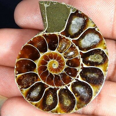 80.50Cts. 100% NATURAL FOSSIL DESIGNER AMMONITE FANCY CABOCHON LOOSE GEMSTONE