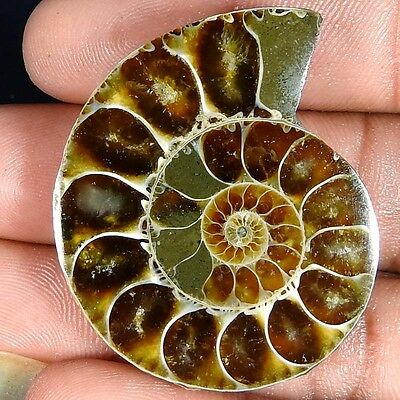 76.60Cts. 100% NATURAL FOSSIL DESIGNER AMMONITE FANCY CABOCHON LOOSE GEMSTONE