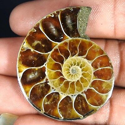 68.30Cts. 100% NATURAL FOSSIL DESIGNER AMMONITE FANCY CABOCHON LOOSE GEMSTONE