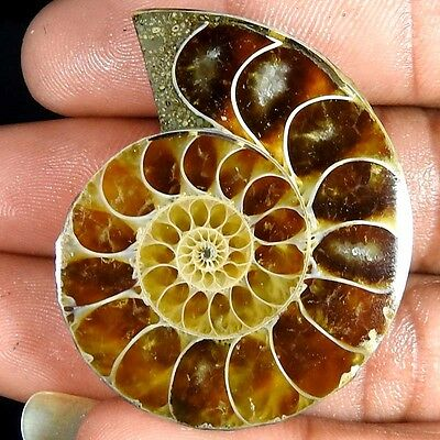 76.00Cts. 100% NATURAL FOSSIL DESIGNER AMMONITE FANCY CABOCHON LOOSE GEMSTONE