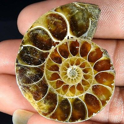 94.80Cts. 100% NATURAL FOSSIL DESIGNER AMMONITE FANCY CABOCHON LOOSE GEMSTONE
