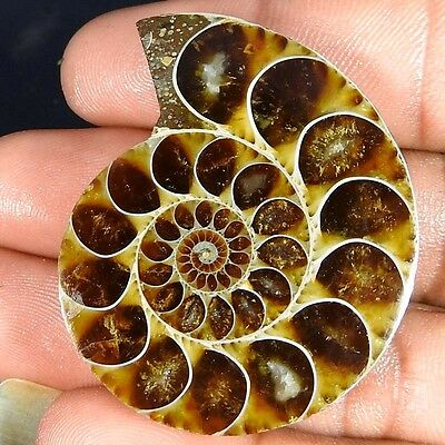 96.60Cts. 100% NATURAL FOSSIL DESIGNER AMMONITE FANCY CABOCHON LOOSE GEMSTONE