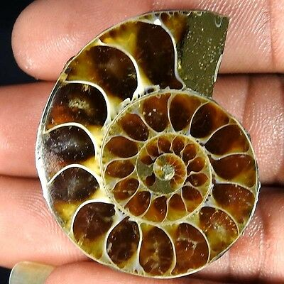 77.50Cts. 100% NATURAL FOSSIL DESIGNER AMMONITE FANCY CABOCHON LOOSE GEMSTONE