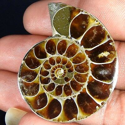 82.10Cts. 100% NATURAL FOSSIL DESIGNER AMMONITE FANCY CABOCHON LOOSE GEMSTONE