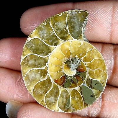 71.30Cts. 100% NATURAL FOSSIL DESIGNER AMMONITE FANCY CABOCHON LOOSE GEMSTONE