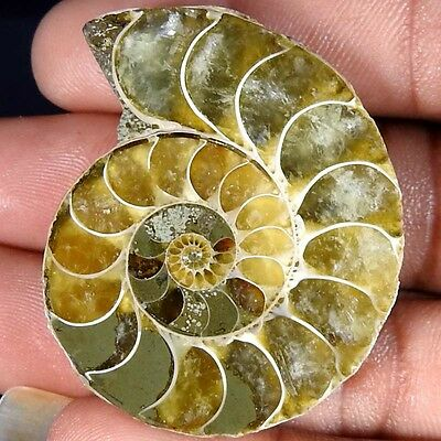85.80Cts. 100% NATURAL FOSSIL DESIGNER AMMONITE FANCY CABOCHON LOOSE GEMSTONE
